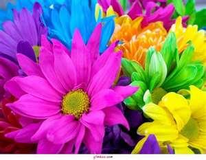flores_coloridas