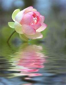 rosa_agua.jpg